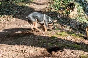 160228-Wald-Spaziergang-Hunde-Lobo-003