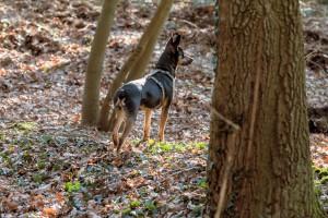 160228-Wald-Spaziergang-Hunde-Lobo-008